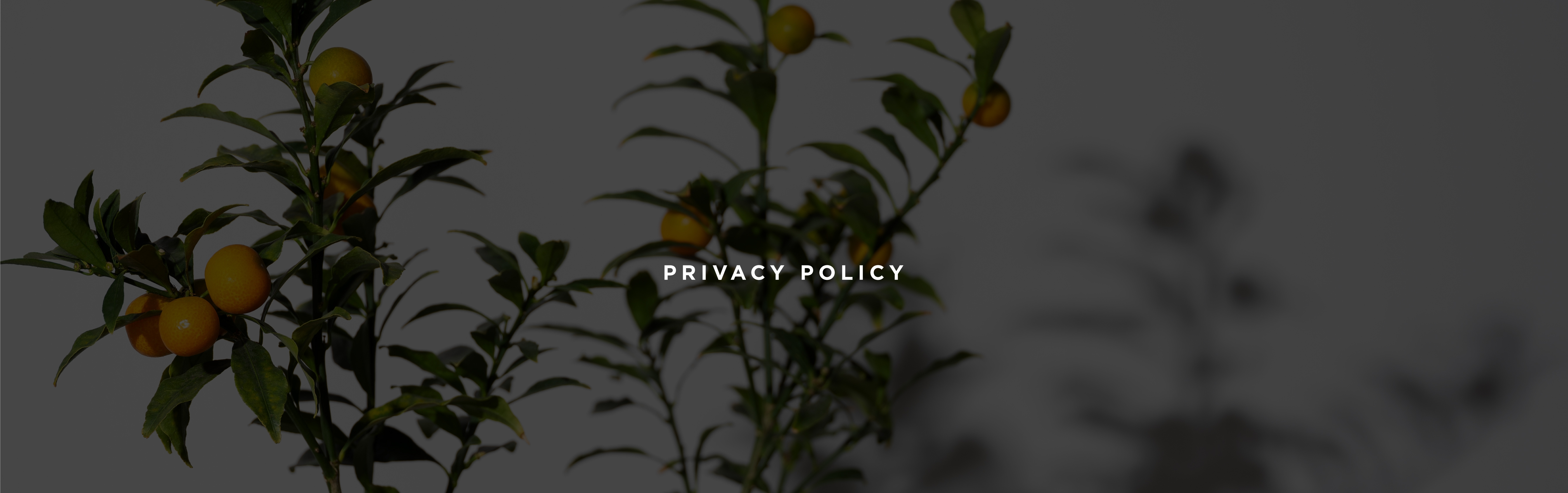 Dresser Une Table À L Anglaise privacy policy - nuevo